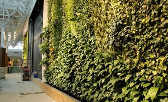 How we can bring Biophilia in to the workplace