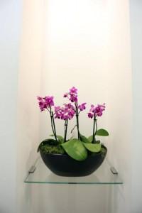 Flowers, Charles Landau dental practice refurbishment