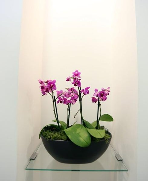 Flowers, Charles Landau dental practice refurbishment