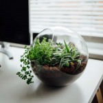 plant at a desk to improve workspace design psychology