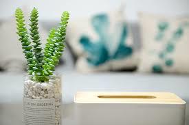 Plants in glass jar
