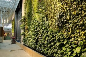 Living wall made from plants