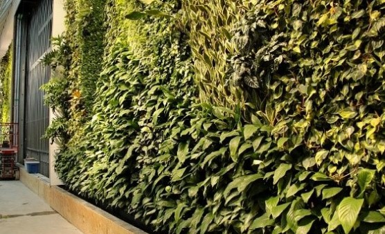 A Guide to Living Walls