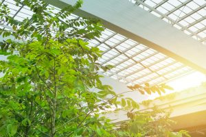 eco office building glass roof and plant